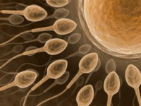 Danish research: Vitamin D increases speed of sperm cells